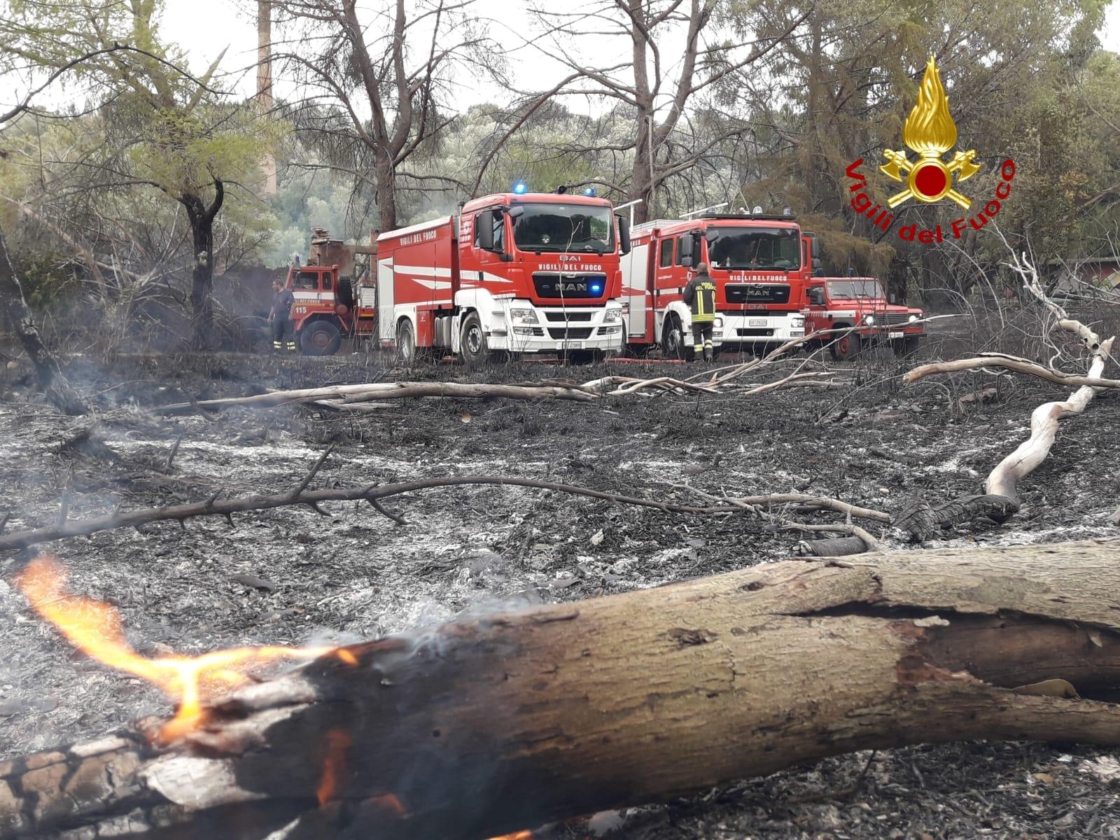 vigili del fuoco incendio bosco istia